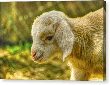 Canvas Print featuring the photograph Cuddly by Dennis Baswell