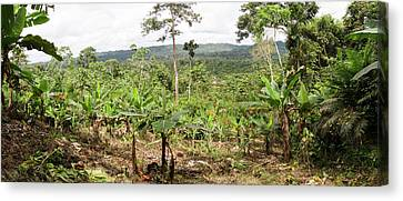 Cultivated Clearing In Amazon Canvas Print