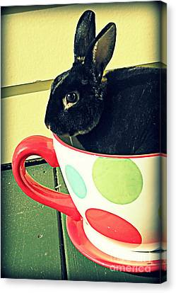 Cup O' Rabbit Canvas Print
