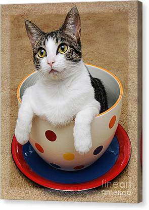 Cup O Tilly 1 Canvas Print