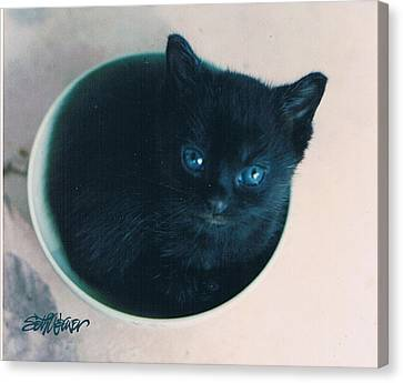 Cup O'kitty Canvas Print by Seth Weaver
