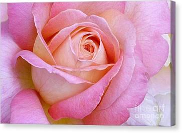 Cupid's Choice Rose Canvas Print