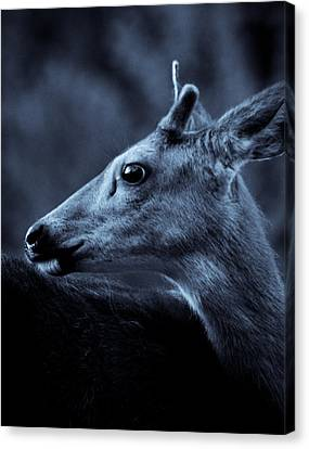 Canvas Print featuring the photograph Curious  by Adria Trail