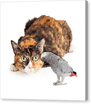 Curious Cat Looking At Bird Canvas Print by Susan Schmitz