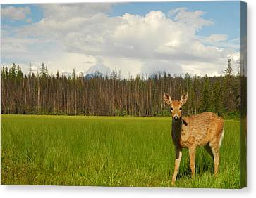 Curious Deer In Glacier National Park Canvas Print by Larry Moloney