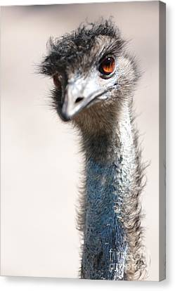 Curious Emu Canvas Print by Carol Groenen
