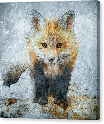 Curious Fox Canvas Print by Steve Barge