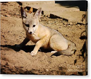 Curious Kit Fox Canvas Print