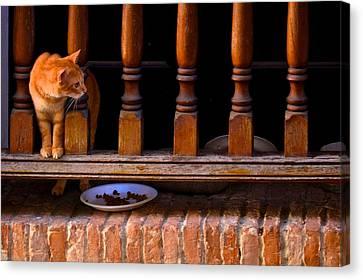 Curious Kitty Canvas Print by Ricardo J Ruiz de Porras