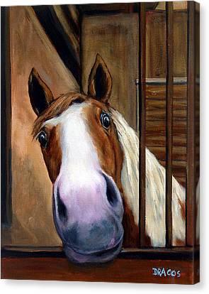 Curious Paint Horse Canvas Print by Dottie Dracos