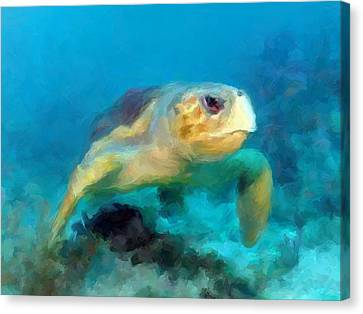 Curious Sea Turtle Canvas Print by David  Van Hulst