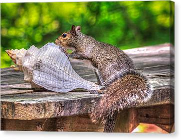 Canvas Print featuring the photograph Curious Squirrel by Rob Sellers