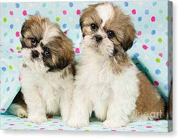 Curious Twins Canvas Print