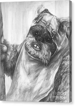 Curious Wicket Canvas Print