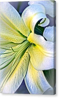 Canvas Print featuring the photograph Curl Of A Lily by Dave Garner