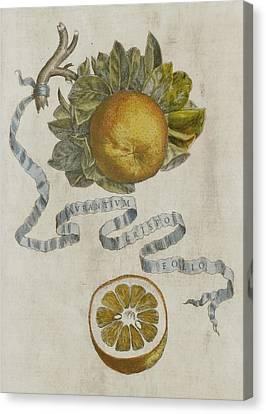 Curled Leaf Orange Canvas Print