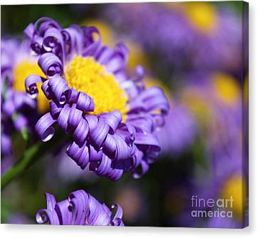 Curly Haired Beauty Canvas Print