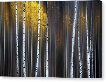 Curtain Of Fall Canvas Print