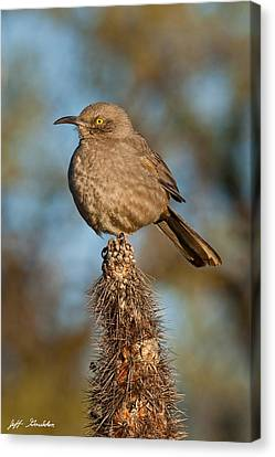 Curve-billed Thrasher On A Cactus Canvas Print