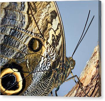 Curve Of A Butterfly Canvas Print