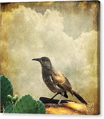 Canvas Print featuring the photograph Curved Bill Thrasher by Karen Slagle
