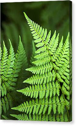 Curved Fern Leaf Canvas Print