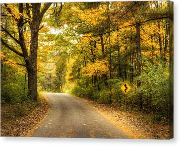 Pine Needles Canvas Print - Curves Ahead by Scott Norris