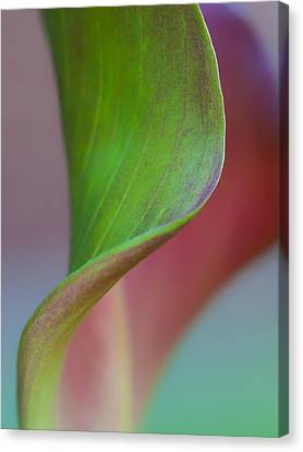 Canvas Print featuring the photograph Curves Of A Calla Lily by Zoe Ferrie