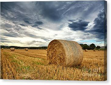 Cut Field Canvas Print by Jane Rix