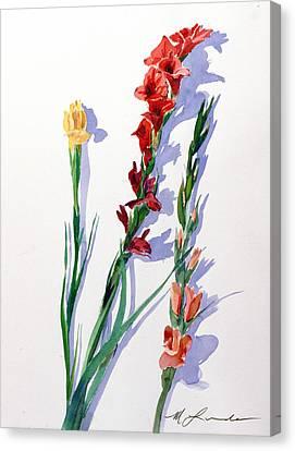 Cut Gladiols Canvas Print by Mark Lunde