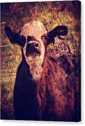 Cute Calf Grunge Canvas Print by Cassie Peters