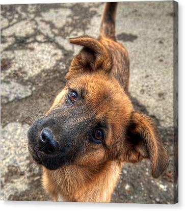 Cute Dog Closeup Canvas Print