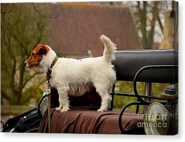 Cute Dog On Carriage Seat Bruges Belgium Canvas Print
