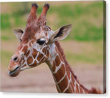 Cute Giraffe Portrait  Canvas Print by Dan Sproul