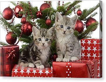 Cute Kitten Xmas Presents Canvas Print