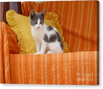 Canvas Print featuring the photograph Cute Kitty by Vicki Spindler