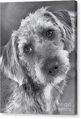 Cute Pup In Black And White Canvas Print by Natalie Kinnear