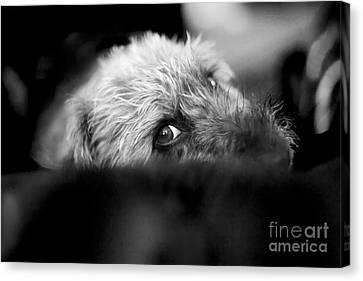 Cute Pup Sneek A Peek Canvas Print by Natalie Kinnear