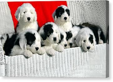 Cute Puppies Canvas Print