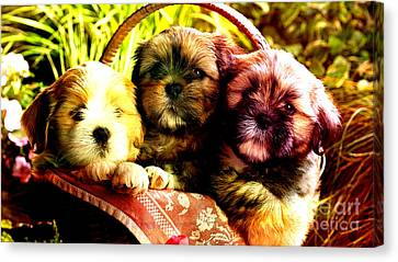 Cute Terrier Puppies Canvas Print by Marvin Blaine