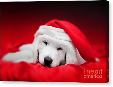 Cute White Puppy Dog In Chrstimas Hat Sleeping In Red Satin Canvas Print by Michal Bednarek