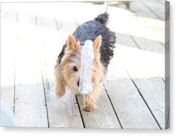 Cutest Dog Ever - Animal - 011317 Canvas Print by DC Photographer