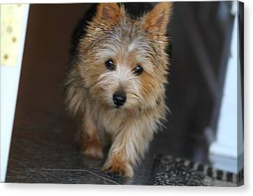 Dog Canvas Print - Cutest Dog Ever - Animal - 011323 by DC Photographer