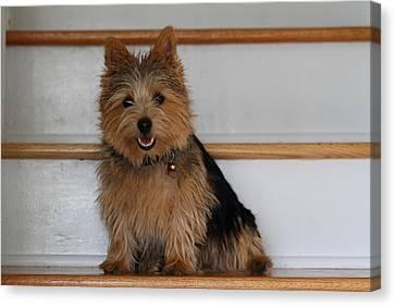 Cutest Dog Ever - Animal - 011333 Canvas Print