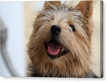 Fluffy Canvas Print - Cutest Dog Ever - Animal - 011337 by DC Photographer