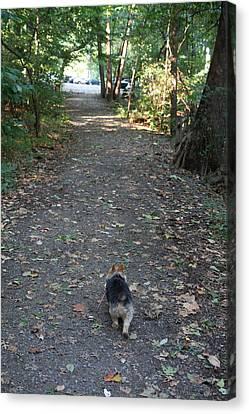 Cutest Dog Ever - Animal - 011353 Canvas Print