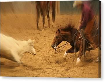 Cutting Horse 8 Canvas Print