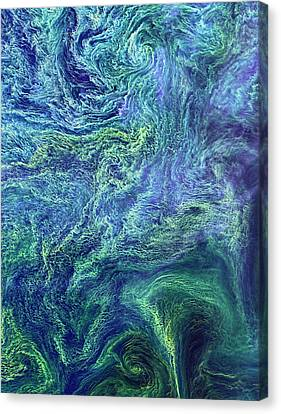 Phytoplankton Canvas Print - Cyanobacteria Bloom by Nasa