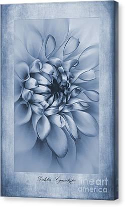 Blossom Canvas Print - Cyanotype Dahlia  by John Edwards