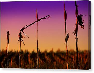 Cycles Canvas Print by Mary Burr